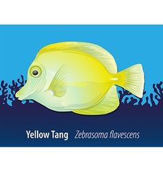 Yellow tang swimming in the ocean vector