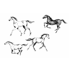 Horses collection vintage vector
