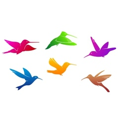Hummingbirds symbols vector image