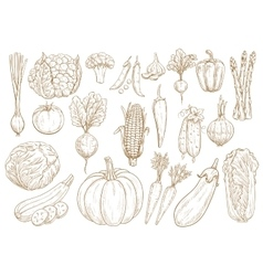 Vegetables sketch isolated icons set vector