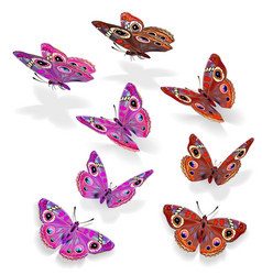 set of beautiful butterflies vector image