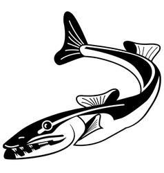 baracuda vector image