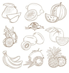 Set of outline hand drawn fruits with leaves vector
