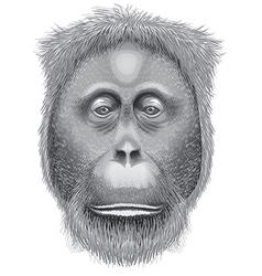 A head of an orangutan vector