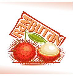 Rambutan fruit vector