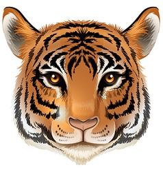 A head of a tiger vector
