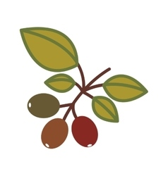 Coffee plant icon vector