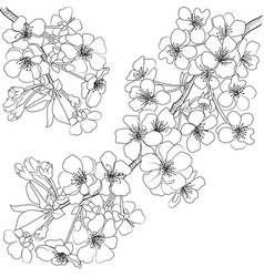 Sketch blossoming branch vector