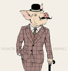 Fashion of piggy in tweed suit with walking stick vector