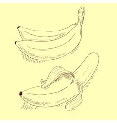 Banana sketch vector image vector image