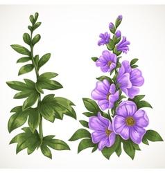 Green grass and purple flower vector