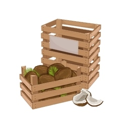 Wooden box full of coconut isolated vector