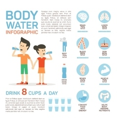 flat style of body water infographic vector image