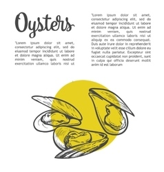fresh marine oyster vector image
