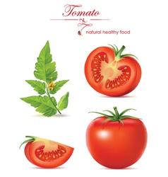 Tomato realistic vector