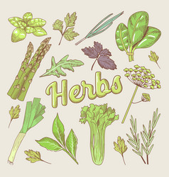 herbs hand drawn doodle organic natural food vector image