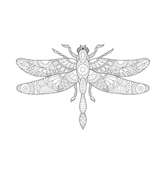 Dragonfly coloring book for adults vector image