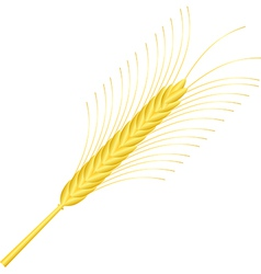 Wheat ear isolated on white vector