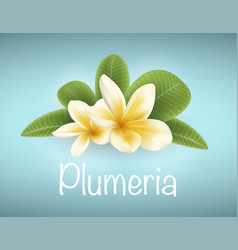 White and yellow plumeria flower vector