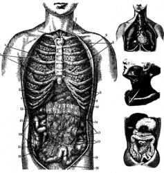 anatomical cutaways vector image