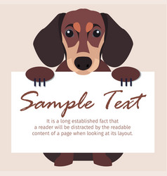 dachshund with signboard isolated vector image vector image