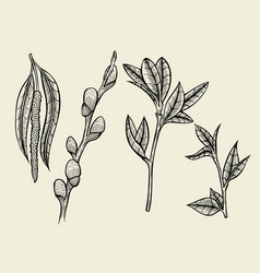 hand drawn herbal flowers isolated vector image