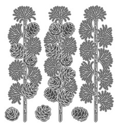 set images of larch branches and cones vector image