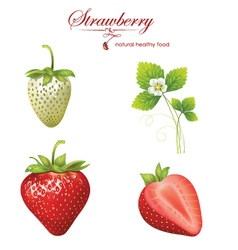 Strawberry realistic vector image