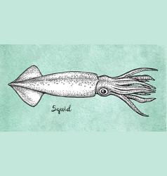 squid ink sketch on old paper vector image vector image
