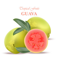 Guava fruit realistic isolated on white vector