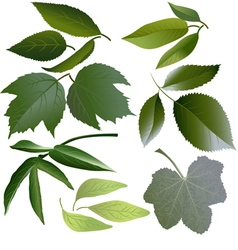 Set of leaves of several flowers vector