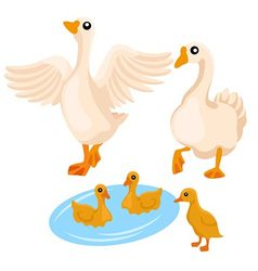 Family of white geese on the white background vector