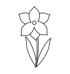 narcissus flower spring season thin line vector image