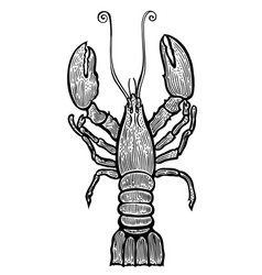 Lobster hand drawn vector