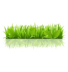 Grass and leafs vector