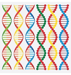 DNA molecule vector image
