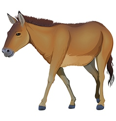 A brown horse vector image vector image