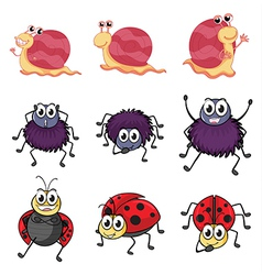 A spider a ladybug and a snail vector image