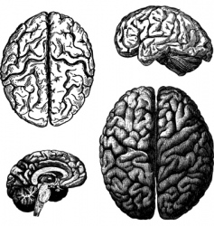 brain illustrations vector image vector image