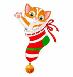 Christmas cat in sock vector image vector image