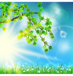 Summer green background with selective focus vector