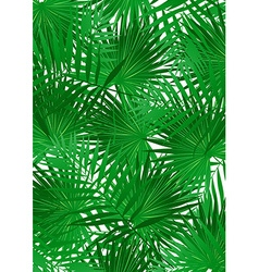 Tropical Cabbage palm on white background vector image vector image