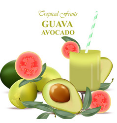 Smoothie guava and avocado fruits realistic vector