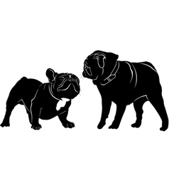 Meeting animals dogs french bulldog and pug vector