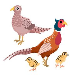 Family of pheasants on the white background vector image vector image