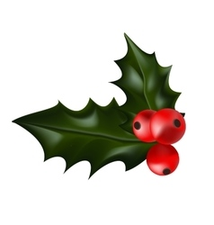 Holly christmas plant holly berry vector