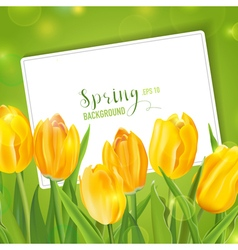 Spring tulips flower background - with card vector