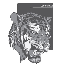 raging tiger vector image