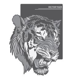 Raging tiger vector