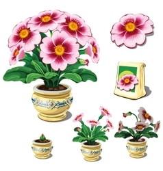 Seeds in bag and stages of growth potted flowers vector